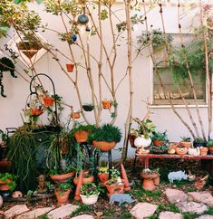 terracotta pot gardening, terracotta garden, potted plants, backyard, pot plant