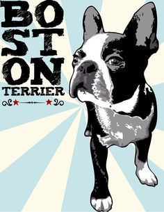 Boston Terrier Pop Art