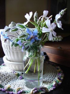 tiny bouquet of borage and soap wort in my kitchen, via Flickr.