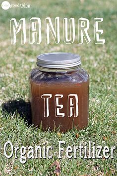 Manure Tea - your PLANTS will love it!