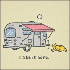 Happy camping dog
