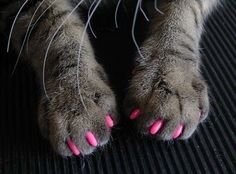 toenails, nail polish, funny cats, pink nails, pets, manicures, toes, paints, kitty
