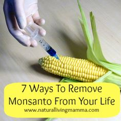 7 Ways to Remove Monsanto From Your Life