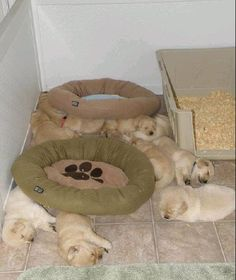 Who needs beds? puppies, anim, floor, funni, pet, silli puppi, dog beds, babi, baby dogs
