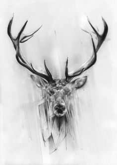 Red Deer Art Print