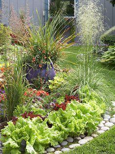 Edible garden border ~brilliant