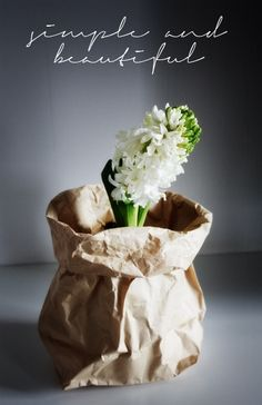 plants in a paper bag