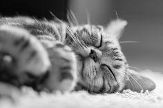 Cooper sleeps by todmac, via Flickr