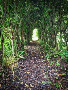 Beautiful natural archway