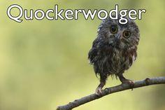 anim, northern sawwhet, information technology, baby owls, greeting cards, babi owl, quot, sawwhet owl, common sense