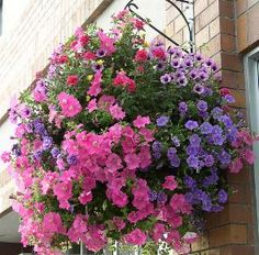 Best Flowers for Hanging Baskets- good ideas