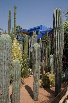 Majorelle Gardens in Marrakech Morocco