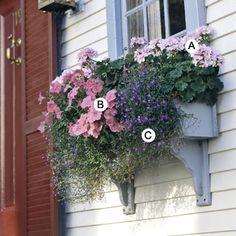 Window Boxes for Sun with Pastel Color -- A. Geranium (Pelargonium 'Bullseye Light Pink') +  B. Petunia 'Supertunia Bermuda Beach' + C. Lobelia 'Riviera Blue Eyes'