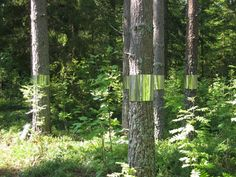 'Clear Cut' Land Art Installation / Kjellgren Kaminsky Architecture