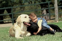 Labrador, perro niñero Tumblr