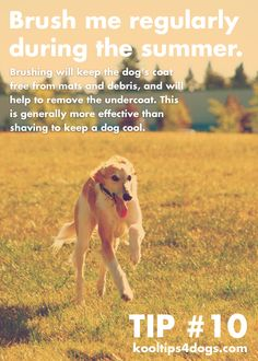 Brush your dog regularly during the summer. This will help keep your dog cool. www.koolcollar4dogs.com