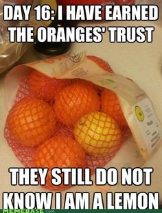 sneaky lemons....for some reason this just got me to lol stupid but funny