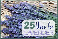 Lavender is hands down one of our favorite herbs. It has so many wonderful uses! Here are 25 wonderful uses for lavender.