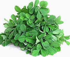 What is fenugreek? Cooking with fenugreek seeds and leaves, preparation and storage. Fenugreek recipes. Health benefits of fenugreek. Growing fenugreek.