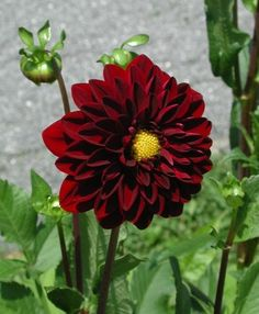 list of annuals to plant in late spring