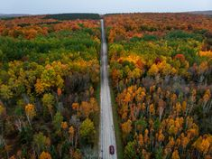 The Ultimate Guide to Northern Michigan's Scenic Tunnel of Trees