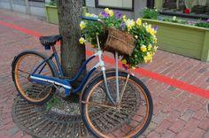 Like bicycl, flower bike, flower power