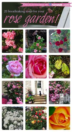 20 Breathtaking Roses {Curated Board for Hometalk} - A Delightsome Life