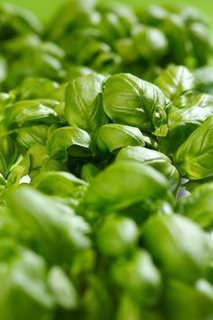 Herb Garden Plant Design