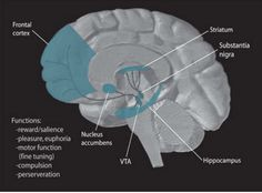 Novelty and the brain | Interesting thinking for pedagogy and space