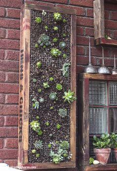 A vertical succulent garden