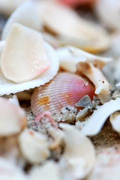 beach - seaside - costal living - Seashells