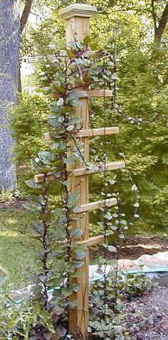 A great trellis idea for climbing vines!