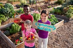 IINsider's Digest: Why We Should Still Eat Organic, Food Insecurity on the Rise and more…