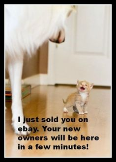 Ha ha... cute kitten sells dog on ebay! For more great humor pics and silly jokes visit www.bestfunnyjokes4u.com/