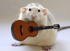 miniatur, mice, anim, musicals, pet, musical instruments, guitar players, guitars, rats