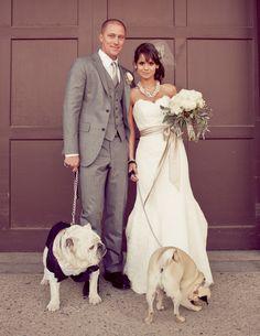 dog pics, friends, dog photos, grey suits, bride dog, bulldogs, dress, pugs, photography