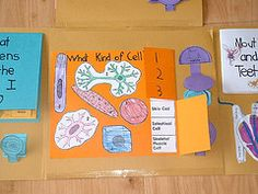 human body lapbook...cool science