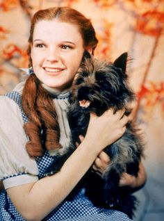 Judy Garland with Toto in The Wizard of Oz