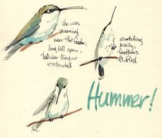 Sketching in Nature: Hummers!