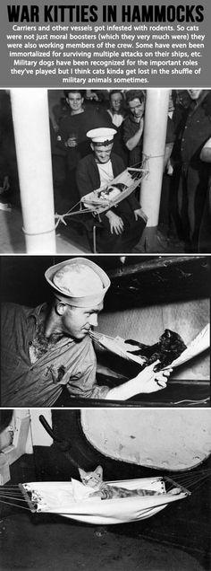 War kitties in hammocks…