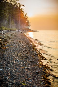 relaxing on the coast, surrounded by nature at Rathtrevor Provincial Park on Vancouver Island.