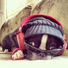 @kotaro2007  #bostonterrier  #dog  #dogs  #dogstagram  #petstagram  #cutedogs  #doglovers  #smile  #funnydog  #puppy  #kawaii  #cuteanimals  #adorable  #ボストンテリア  #boston #terrier #picture