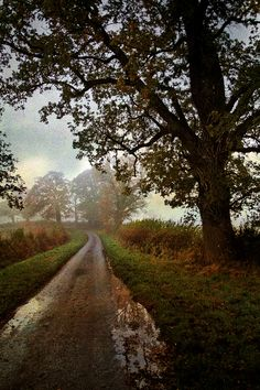 a perfectly country lane in autumn