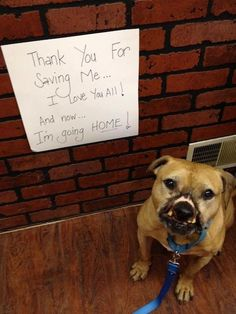 Rescued Pit bull who survived years of dogfighting finds his forever home