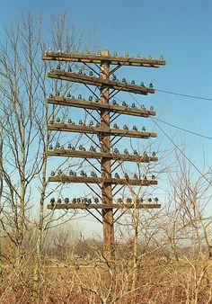 Railroad Pole Line in decay