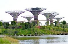 View of the alien looking artificial trees in #gardensbythebay one of Singapore's main touristic attractions.