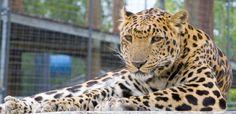 Cat - The Wild Animal Sanctuary