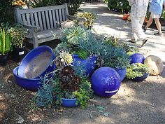succulents + cobalt blue containers