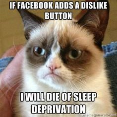 marshmallow, grumpy kitty, grumpi cat, funni, walking dead, thought, baby cats, grumpy cats, cat memes