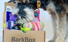 BarkBox | stuff my dogs would like - subscriptions to fun dog stuff in the mail